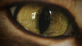 Cat Eye Super Macro Transition Zoom-In stock video