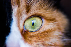 Cat Eye Tiro macro Fotos de Stock Royalty Free