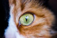 Cat Eye Tiro a macroistruzione Fotografie Stock Libere da Diritti