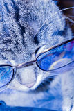 Cat in Eyeglasses Royalty Free Stock Photo