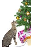 Cat eyeing the tempting Christmas decorations Stock Photo