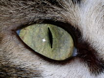 Cat Eyes. A macro of a gray & white tabby cat eye royalty free stock image