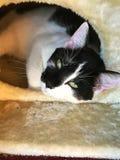 Cat Eyes Imagenes de archivo