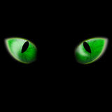 Cat eyes. Glowing bright green cat eyes Stock Photography