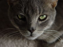 Cat Eyes. There was an awkward silence as the cat turned to look at me Royalty Free Stock Photography