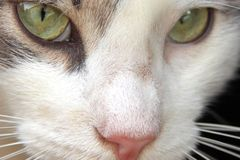 Cat Eyes. Crisp and vivid details in a close up of a cat\'s eyes Stock Photography