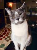 Cat Eyes foto de archivo