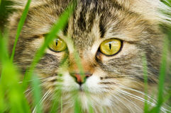Cat eyes Stock Photography