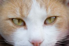 Cat Eyes. Close up to camera Stock Images