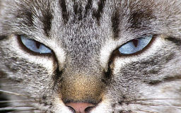 Cat eyes Royalty Free Stock Image