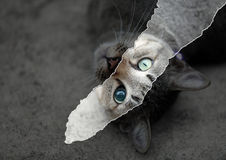 Cat eyes. Joint paper, the lack of cats eyes Stock Images