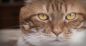 Cat eyes. In first plane Royalty Free Stock Photos