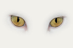 Cat eyes. Closeup on eyes of a white cat Royalty Free Stock Photography