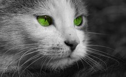 cat eyes Στοκ Εικόνες