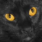 Cat Eyes Fotografie Stock