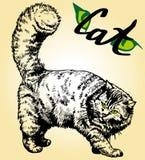 Cat Eyes Photographie stock libre de droits