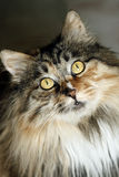 cat eyes Στοκ εικόνες με δικαίωμα ελεύθερης χρήσης