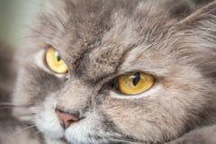 Cat Eyes Imagem de Stock Royalty Free