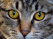 Cat Eyes Foto de archivo libre de regalías
