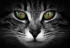 Cat Eyes Imagem de Stock