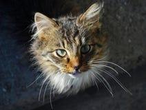 Cat Eyes Fotografía de archivo