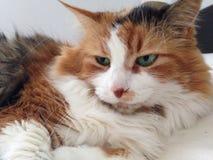 Cat Eyes Immagine Stock