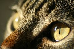 Cat eyes Royalty Free Stock Photo