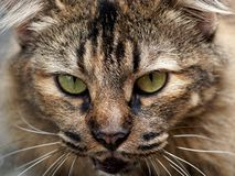 Cat Eyes stockfoto
