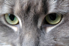 Cat eyes Royalty Free Stock Photos