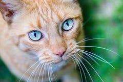 Cat Eyes Fotografia Stock Libera da Diritti