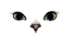 Cat eyes. Cat's eyes and nose on white background Stock Photos