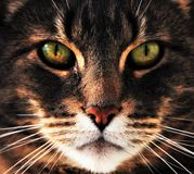 Cat Eyes Photo stock