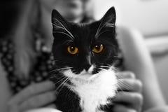 Cat Eyes lizenzfreie stockbilder