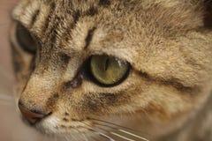 Cat Eyes Royalty-vrije Stock Afbeelding