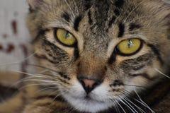 Cat Eyes Immagine Stock Libera da Diritti
