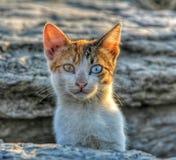 Cat. Eyes amazing royalty free stock images