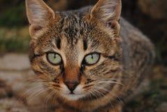 Cat eyes. Beautiful feral cat green eyes Stock Photo