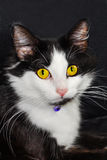 Cat Eyes Royalty Free Stock Photos