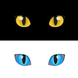 The cat eyes Royalty Free Stock Photography