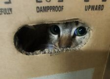 Cat Eyes in the box