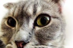 Cat eyes. Close up Stock Photography