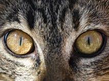 Cat eyes close up photo. Cat eyes in detail, extreme closeup of eyes Stock Photo