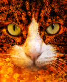 Cat Eyes Close Up Portrait. With a Fantasy Filter Stock Photography
