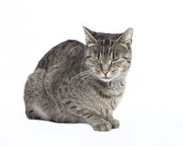 Cat with eyes closed Royalty Free Stock Images
