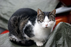 Cat with eyes closed. Sitting spotted cat with closed eyes stock photo