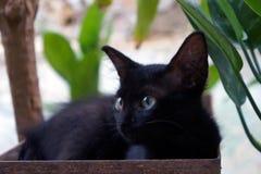 Cat eyes Royalty Free Stock Image