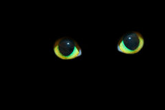 Cat Eyes in the Dark. Cats Eyes on a Black Isolated background Royalty Free Stock Image