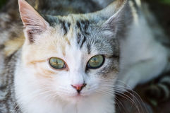 Cat,Eyes different cathedrals, sleeping pussy, tired pussy, the most beautiful cat eyes, beautiful eyed pussy, Pictures of domesti. C cat, pictures of the most stock image