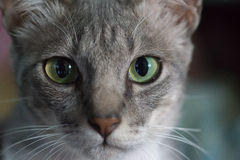 Cat Eyes Green Royalty Free Stock Images