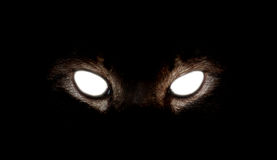 Cat Eyes hipnótica no fundo preto Imagens de Stock